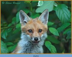 fox-91.jpg