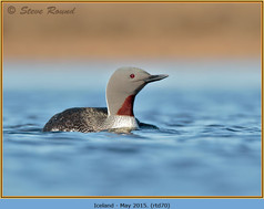 red-throated-diver- 70.jpg