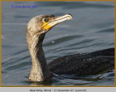 cormorant-10.jpg