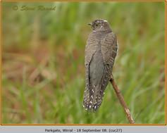 cuckoo-27.jpg
