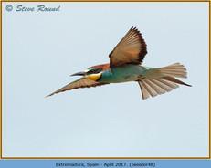 bee-eater-48.jpg