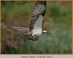 osprey-32.jpg