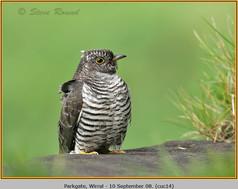 cuckoo-14.jpg
