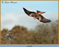 red-kite-48.jpg