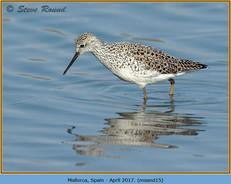 marsh-sandpiper-15.jpg