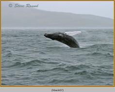 humpback-whale-07.jpg