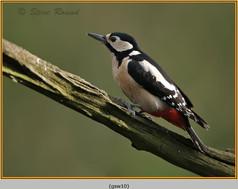 gt-s-woodpecker-10.jpg