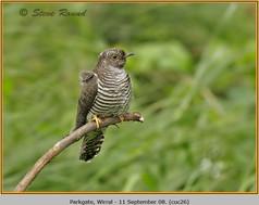 cuckoo-26.jpg