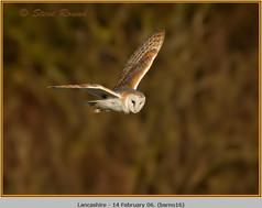 barn-owl-16.jpg