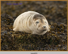 grey-seal-09.jpg
