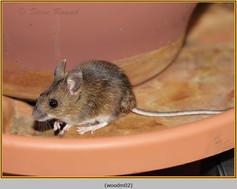 wood-mouse-02.jpg