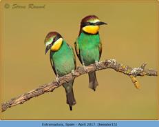 bee-eater-15.jpg