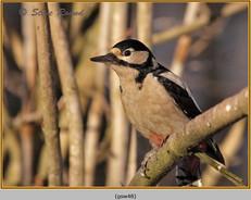 gt-s-woodpecker-48.jpg