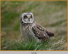 short-eared-owl-38.jpg
