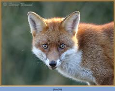 fox-59.jpg