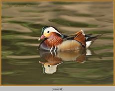 mandarin-31.jpg