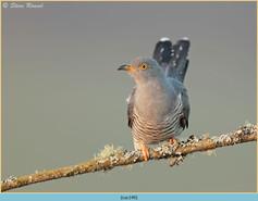 cuckoo-149.jpg