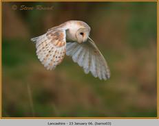 barn-owl-03.jpg