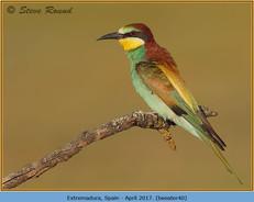 bee-eater-40.jpg