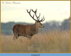 red-deer-64.jpg