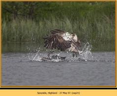 osprey-21.jpg