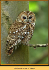 tawny-owl-09.jpg