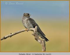 cuckoo-22.jpg