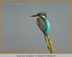 kingfisher-23.jpg