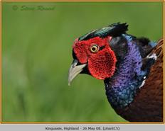 pheasant-15.jpg