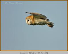 barn-owl-29.jpg