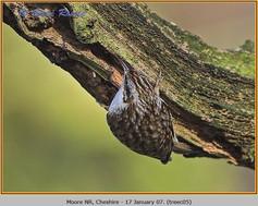 treecreeper-05.jpg