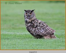 eagle-owl-12c.jpg
