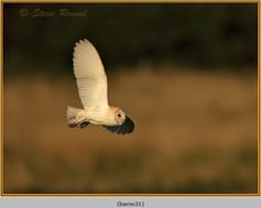 barn-owl-31.jpg