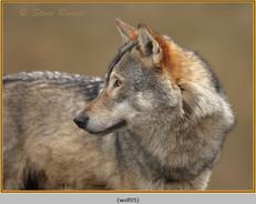wolf-05.jpg