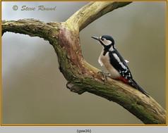 gt-s-woodpecker-26.jpg