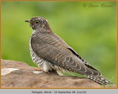 cuckoo-19.jpg