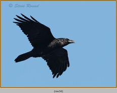 raven-34.jpg