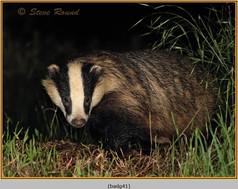 badger-41.jpg