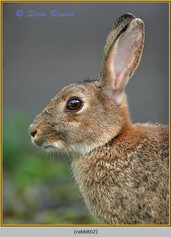 rabbit-02.jpg