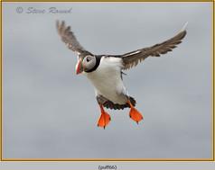 puffin- 66.jpg