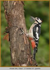 gt-s-woodpecker-44.jpg