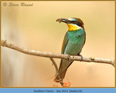 bee-eater-10.jpg