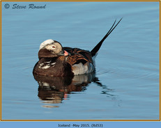 long-tailed-duck-53.jpg