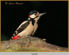 gt-s-woodpecker-28.jpg