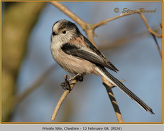 long-tailed-tit-24.jpg