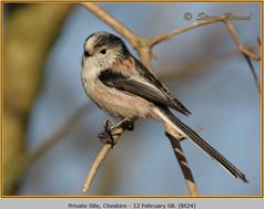 long-tailed-tit-24.jpg