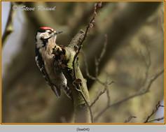 lesser-spotted-woodpecker-04.jpg