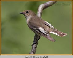 pied-flycatcher-20.jpg
