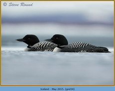 great-northern-diver-34.jpg