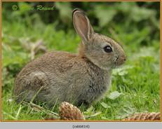 rabbit-14.jpg